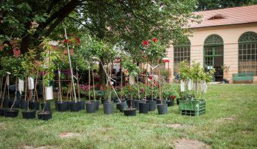 nejen růže ze zámeckého zahradnictví na prodej